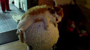 romeo the cat and big ball of yarn youtube