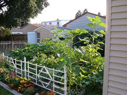 what is sustainable gardening vegetable gardener