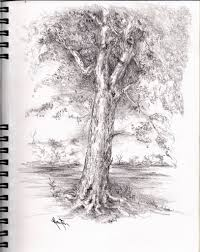pencil sketches of trees pencil art drawing