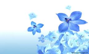 Pretty Blue Wallpapers by Pretty Blue Wallpaper All Hd Wallpapers