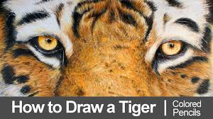 draw a tiger with colored pencils