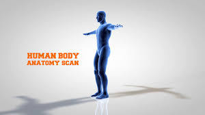 3d Human Anatomy 3d Model Human Anatomy Scanning From Bottom Up Motion Background