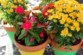 how to paint 1 flower pots and add color to your backyard hometalk