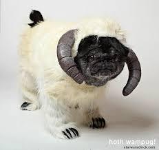 Sheep Dog Costume Halloween Pug Dog Halloween Starwars Wampa Halloween Town