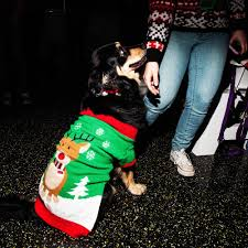 deck the paws photos from nyc u0027s ugly christmas sweater party for