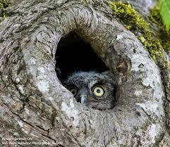 national audubon society posts facebook