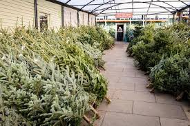 where can you buy a real tree in the huddersfield area