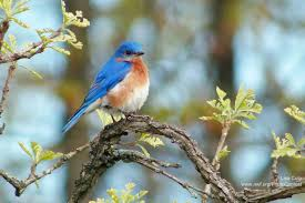 native plants for birds ten favorite trees for wildlife the national wildlife federation