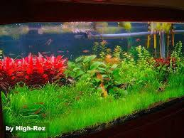 Aquascape Inspiration 136 Best Aquascaping Images On Pinterest Aquarium Ideas Planted
