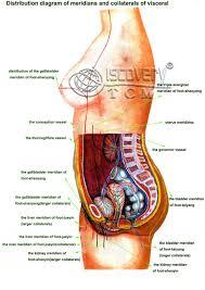 diagram of female bones and internal organs human body archives