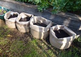 Patio Potato Planters Start To Grow Growing Potatoes In Sacks Jute Planter Bags