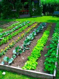 simple and neat picture of backyard vegetable garden design and