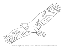 learn draw eagle flying birds step step drawing