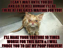 Mad Cat Memes - wet mad cat memes imgflip