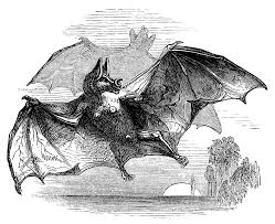 vampire bat free vintage clip art old design shop blog