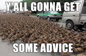 Advice Memes - advice duck memes everywhere