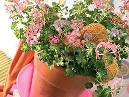 Fragrant Potted Plants - top fragrant houseplants the joy of plants