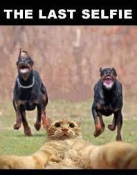Selfie Meme Funny - the last selfie funny meme funny memes