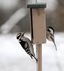 winter tips for feeding birds the spokesman review