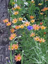 native plant nursery minnesota 10 power performers in the perennial garden minnesota gardener
