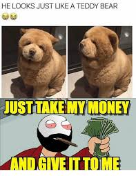 Teddy Meme - he looks just like a teddy bear uusttake my money and give ttoime