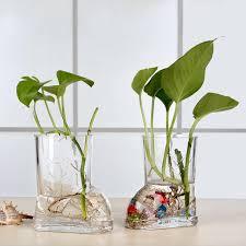 transparent glass trumpet vase hydroponic green radish plants