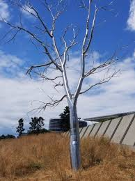 steel tree it s look like the ral one picture of olympic