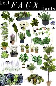Best Living Room Plants Artificial House Plants Living Room Fabulous House Plants