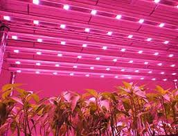 philips led grow light global led grow lights market 2016 philips osram ledhydroponics