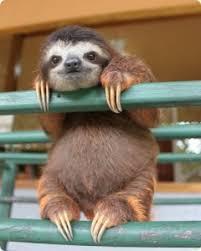 Sloth Whisper Meme - create meme blitz blitz sloth zootopia pictures meme