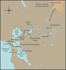 san francisco delta map following whales up a creek mmc