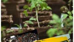 easy to grow super veggies grow your own superfoods moms need