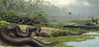 vidio film ular anaconda how titanoboa the 40 foot long snake was found science smithsonian