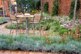 plant combination ideas plant family festuca fescues