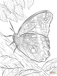 yellow edged giant owl butterfly coloring page free printable