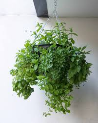 Indoor Kitchen Garden Ideas Home Decor Balcony Herb Garden Metal Hanging Herb Garden