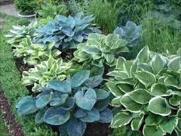 outdoor ideas plans perennial gardens dermot modern better app