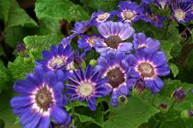 flowering plants in india flowers gallery