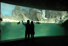vasche acquario acquario di genova