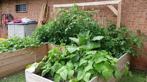 Plants Of Season 4 Joanna by Growing Warm Season Fruits And Vegetables In Childcare Production