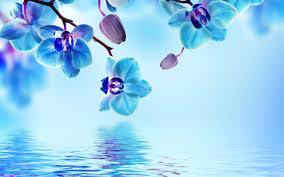 blue flower blue flower wallpapers europe tripsleep co