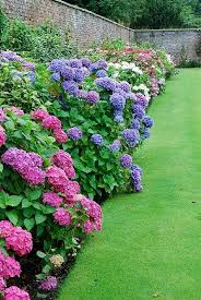 garden bushes with flowers home outdoor decoration