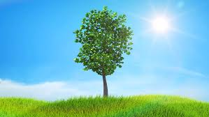 tree growing on a green hill with the sun and clouds background