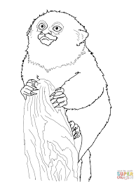 pygmy marmoset monkey coloring page free printable coloring pages