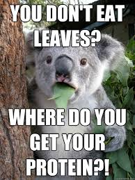 Koala Bear Meme - you don t eat leaves where do you get your protein koala bear