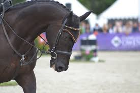 Texas how far can a horse travel in a day images Classic eventing nation eventing nation three day eventing jpg