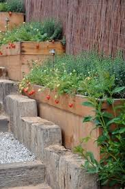99 best permaculture berry garden images on pinterest veggie