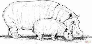 medium image hippo coloring pages hippopotamus under umbrella
