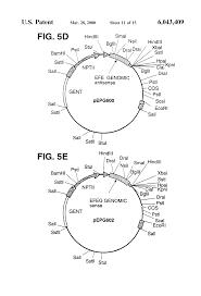 patent us6043409 transgenic plants expressing acc oxidase genes
