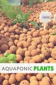 499 best aquaponics images on pinterest aquaponics system